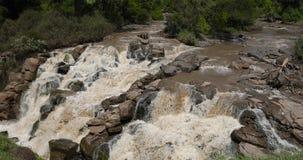 Cascada en parque nacional inundado metrajes