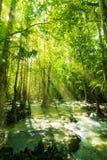 Cascada en selva tropical Imagenes de archivo