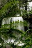 Cascada en Tasmania Fotos de archivo libres de regalías