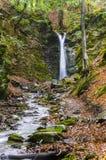 Cascada en un bosque, otoño Imagenes de archivo