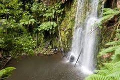 Cascada en una selva tropical verde Fotos de archivo