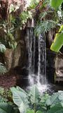 Cascada exótica tropical con las plantas alrededor imagenes de archivo