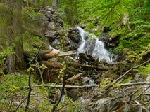 Cascada Höllbachgspreng, macizo enselvado de la roca fotos de archivo