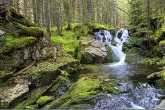Cascada idílica en las montañas cárpatas con el agua potable Foto de archivo