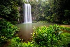 Cascada majestuosa de Millaa Millaa Imágenes de archivo libres de regalías