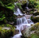Cascada Nueva Zelanda de la selva Imágenes de archivo libres de regalías