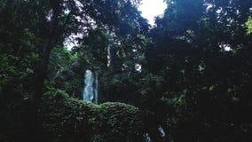 Cascada ocultada detrás de un bosque denso imagenes de archivo