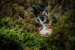 Cascada ocultada en bosque imagenes de archivo