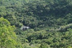 Cascada en selva Imagen de archivo libre de regalías