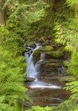 Cascada pacífica de la montaña foto de archivo