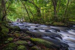 Cascada profunda del bosque Imágenes de archivo libres de regalías