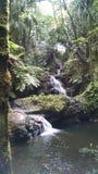 Cascada que cae a lo largo de rocas a una piscina en Hawaii foto de archivo libre de regalías