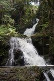Cascada que conecta en cascada abajo selva tropical Fotos de archivo libres de regalías
