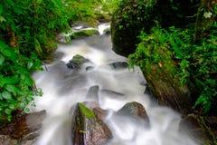 Cascada que fluye abajo de una corriente a través de rocas en el bosque Fotos de archivo libres de regalías