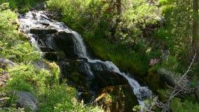 Cascada que fluye en el bosque en California almacen de metraje de vídeo
