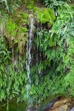 Cascada rodeada por el musgo y las plantas verdes enormes Fotos de archivo libres de regalías