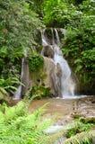 Cascada rodeada por los bosques y las montañas fotos de archivo