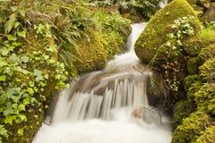 Cascada salvaje del agua Foto de archivo libre de regalías