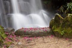 Cascada salvaje del agua Imagen de archivo