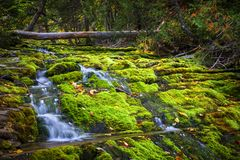 Cascada sobre rocas cubiertas de musgo Fotografía de archivo