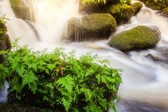 Cascada suave con la planta verde en la estación de lluvias de la roca, Mun Da Fotos de archivo