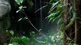 Cascada tropical almacen de metraje de vídeo