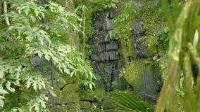 Cascada tropical en la agua que cae y corriente tropical de la selva tropical en roca, los descensos que bajan en el agua y las p almacen de video