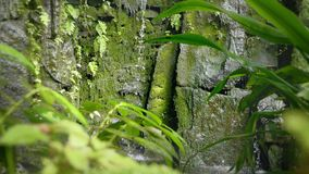 Cascada tropical en la agua que cae y corriente tropical de la selva tropical en roca, los descensos que bajan en el agua y las p metrajes