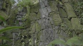 Cascada tropical en la agua que cae y corriente tropical de la selva tropical en roca, los descensos que bajan en el agua y las p almacen de metraje de vídeo