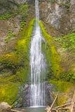 Cascada verde en una selva tropical templada fotografía de archivo