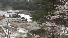 Cascada y flores almacen de metraje de vídeo