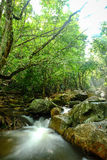 Cascada y la más rainforrest Foto de archivo libre de regalías