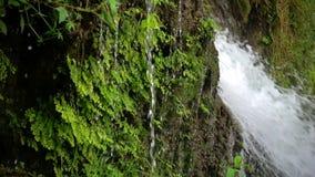 cascada y naturaleza verde metrajes