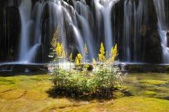 Cascada y planta amarilla Fotografía de archivo libre de regalías