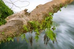 Cascadas DE Agua Azul waterval Royalty-vrije Stock Fotografie