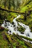 Cascadas de la cascada en rastro del alza del bosque de Oregon Imagenes de archivo