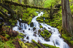 Cascadas de la cascada en rastro del alza del bosque de Oregon Fotos de archivo libres de regalías