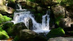 Cascadas del agua sobre rocas cubiertas de musgo verdes en el bosque almacen de metraje de vídeo