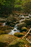 Cascadas del bosque Fotografía de archivo
