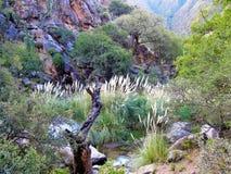 Cascadas del rio Colorado Trek Royalty Free Stock Photography