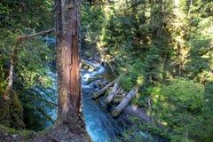 Cascadas en Oregon Fotografía de archivo