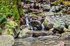 Cascadas en pequeña cala en el bosque Foto de archivo libre de regalías