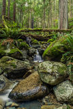 Cascadas en pequeña cala en el bosque imagen de archivo