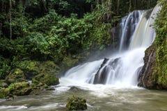 Cascadas escénicas y vegetación enorme en Jamaica fotografía de archivo libre de regalías