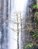 Cascadas naturales en el bosque salvaje Imagen de archivo
