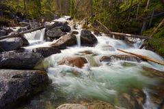 Cascadas y rápidos en el río en el bosque fotos de archivo libres de regalías