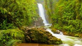 Cascade à écriture ligne par ligne dans la jungle photographie stock libre de droits