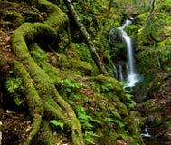 Cascade à écriture ligne par ligne abondante de forêt tropicale Image libre de droits