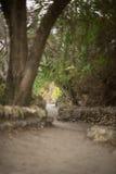 Cascade à écriture ligne par ligne au jardin japonais Photos libres de droits