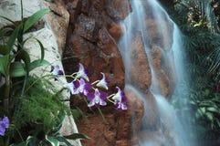 Cascade à écriture ligne par ligne avec l'horizontal de fleurs Image libre de droits